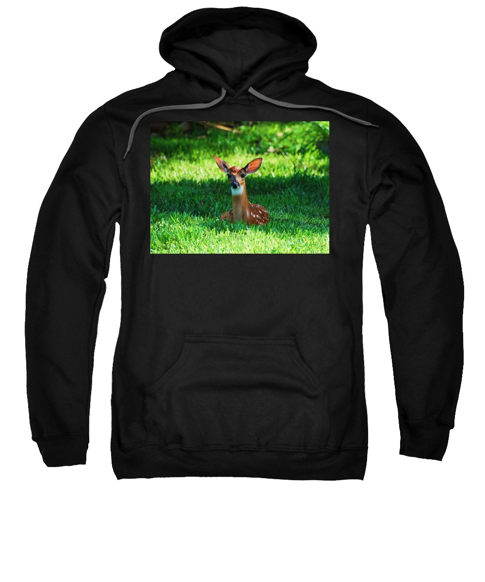 Fawn Deer Sweatshirt featuring the photograph Nature In The Back Yard by Davids Digits