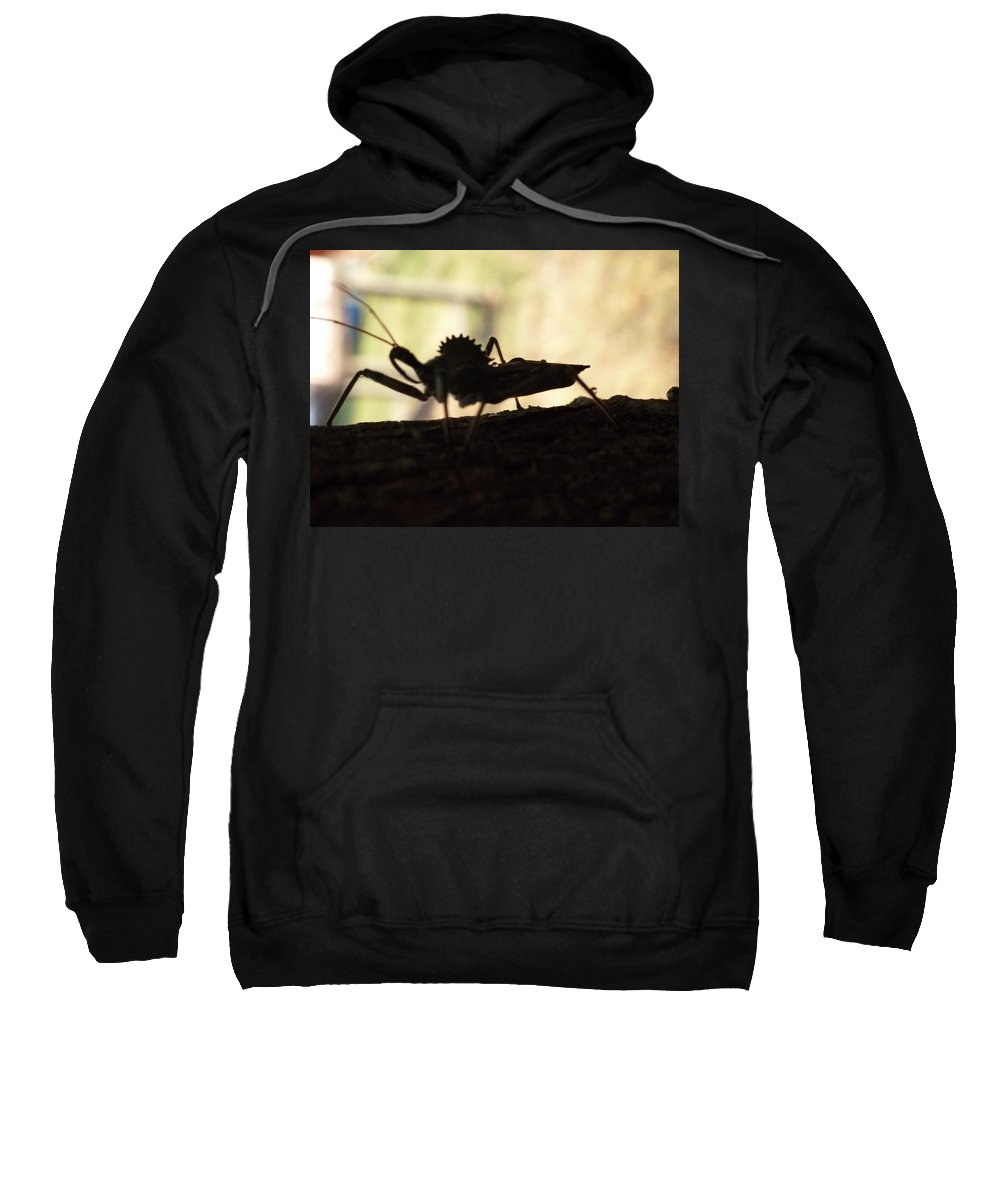 Wheel Bug Sweatshirt featuring the photograph Natures Beast by Karen Capehart