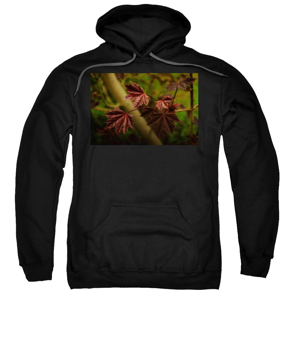 Leaves Sweatshirt featuring the photograph New Leaves For Napanee by John Herzog