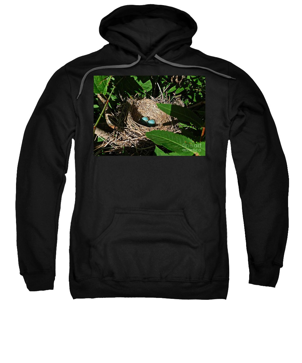 Robins Nest Sweatshirt featuring the photograph New Life - Robin's Nest by Barbara Griffin