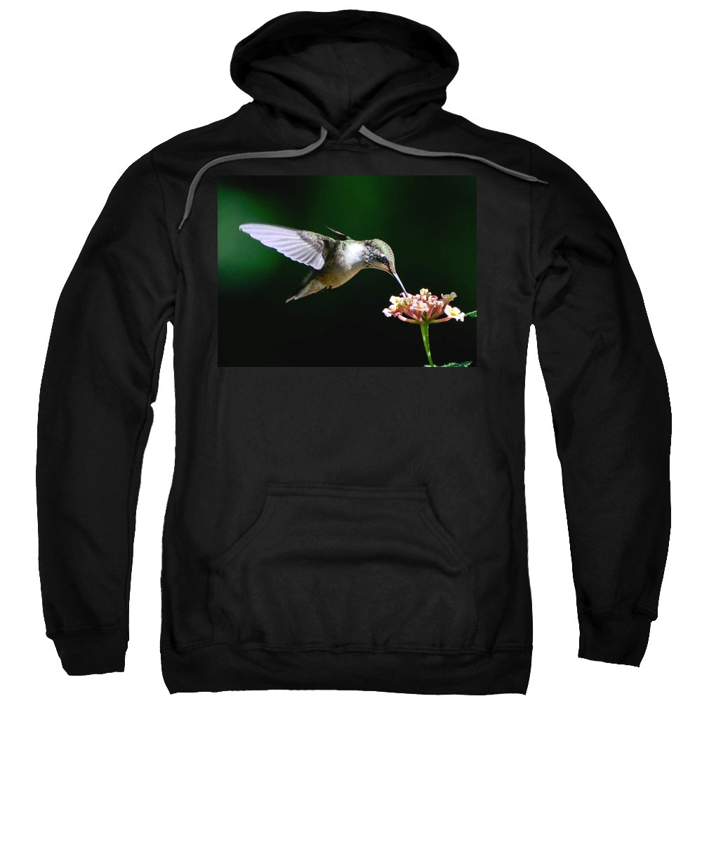 Ruby-throated Hummingbird Sweatshirt featuring the photograph Next Blossom by Amy Porter