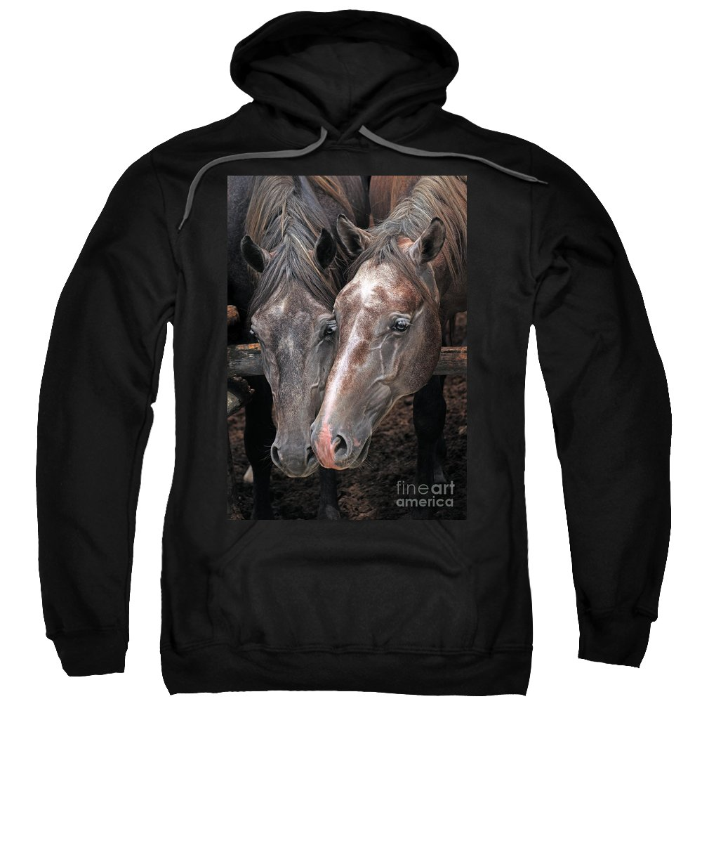 Horse Sweatshirt featuring the photograph Nose To Nose by Angel Ciesniarska