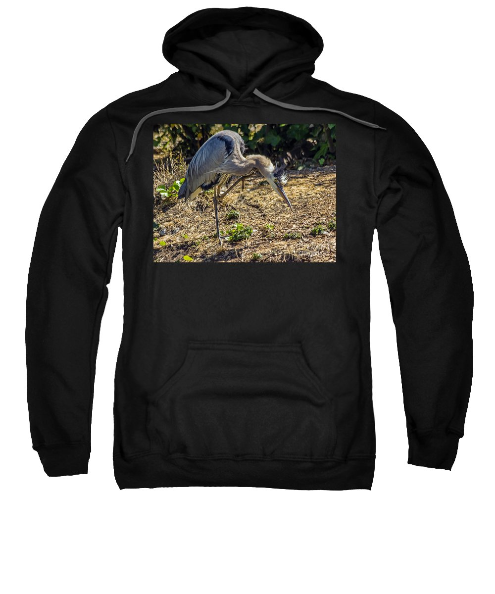 Ardea Herodias Sweatshirt featuring the photograph Nothing Like A Good Scratch by Kate Brown