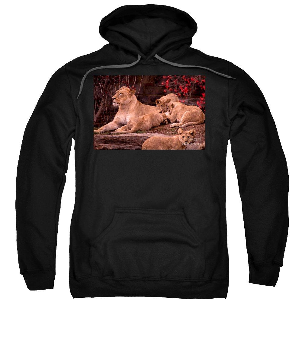 Lion Sweatshirt featuring the photograph Nurturing by David Rucker