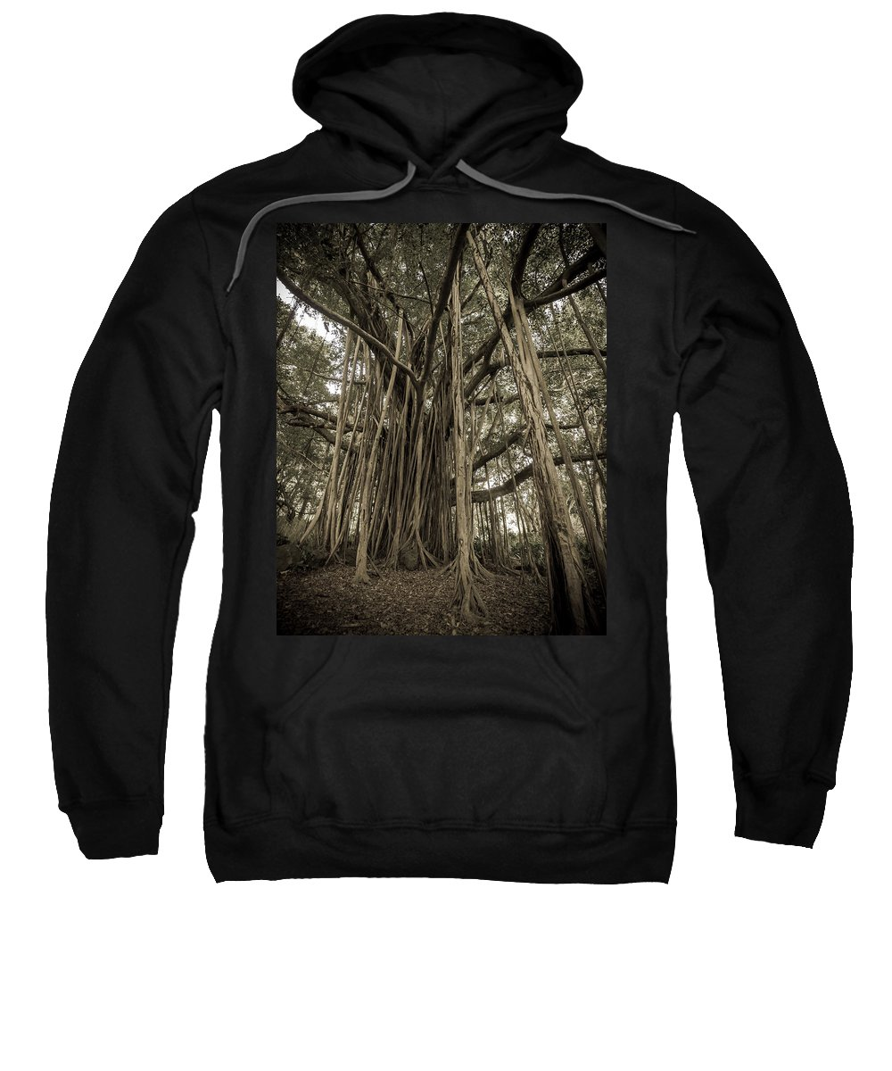 3scape Sweatshirt featuring the photograph Old Banyan Tree by Adam Romanowicz