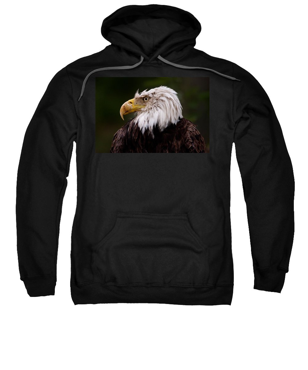 Eagle Sweatshirt featuring the photograph Old Warrior by Brent L Ander