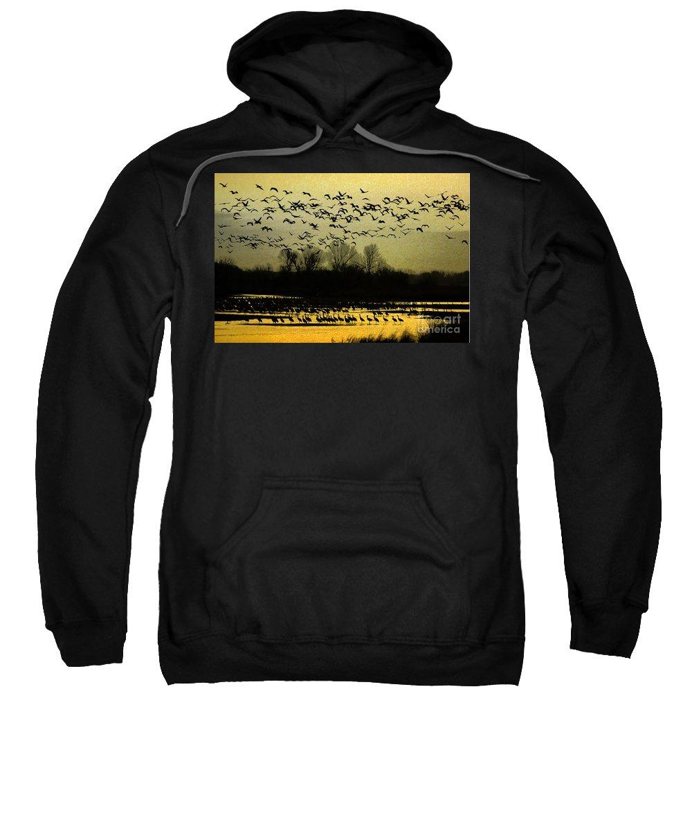 Sandhill Cranes Sweatshirt featuring the photograph On Golden Pond by Elizabeth Winter
