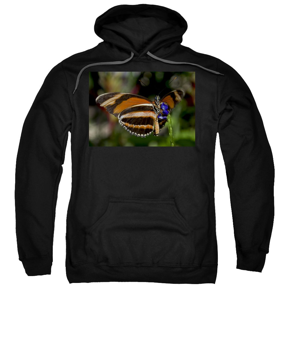 Orange Butterfly Sweatshirt featuring the photograph Orange Banded Butterfly by Heather Applegate