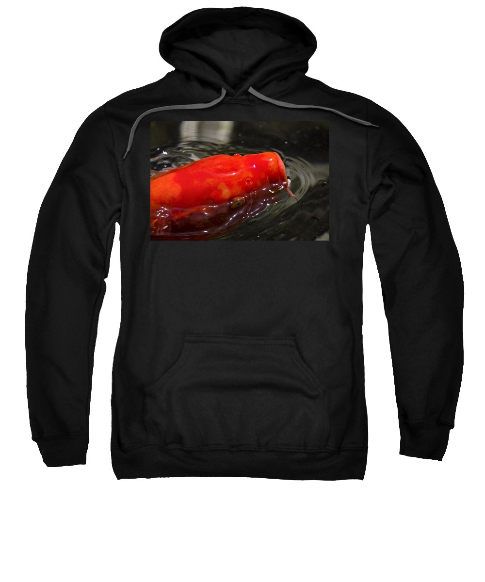 Orange Sweatshirt featuring the photograph Orange Koi by Douglas Barnard