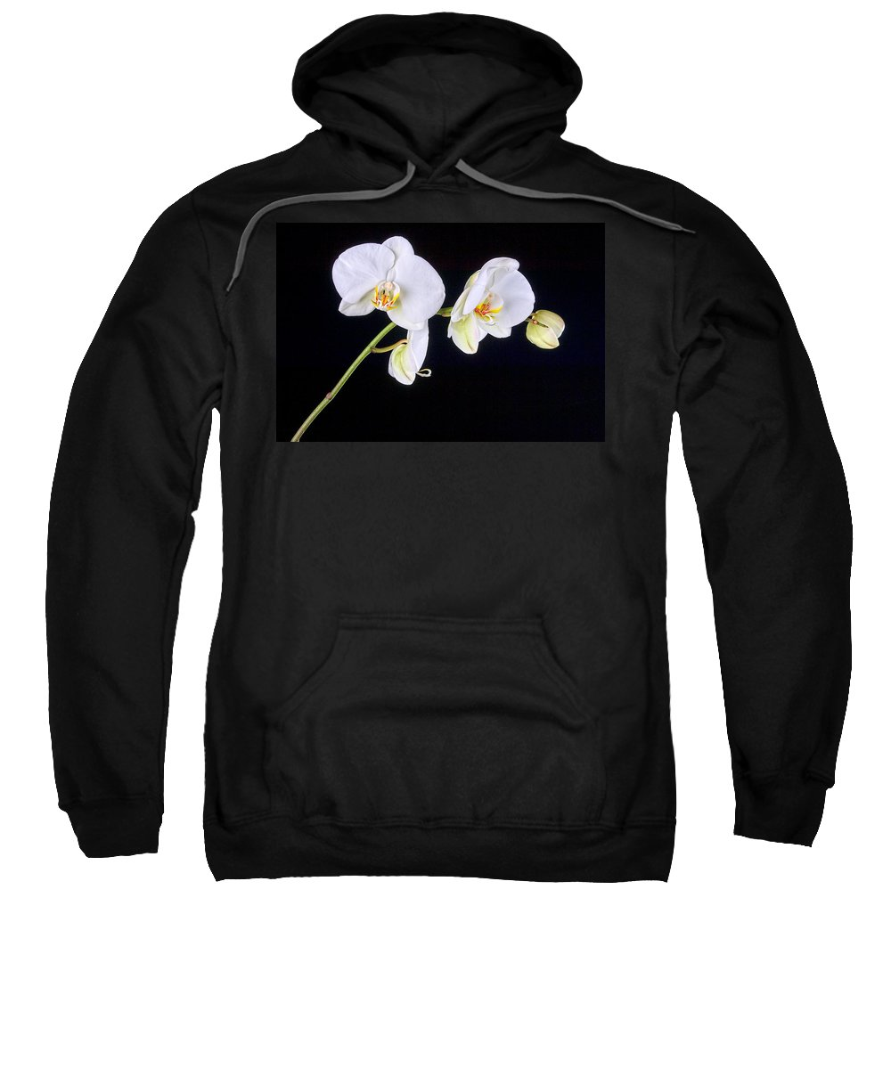 Art Sweatshirt featuring the pyrography Orchid 2a by Mauro Celotti