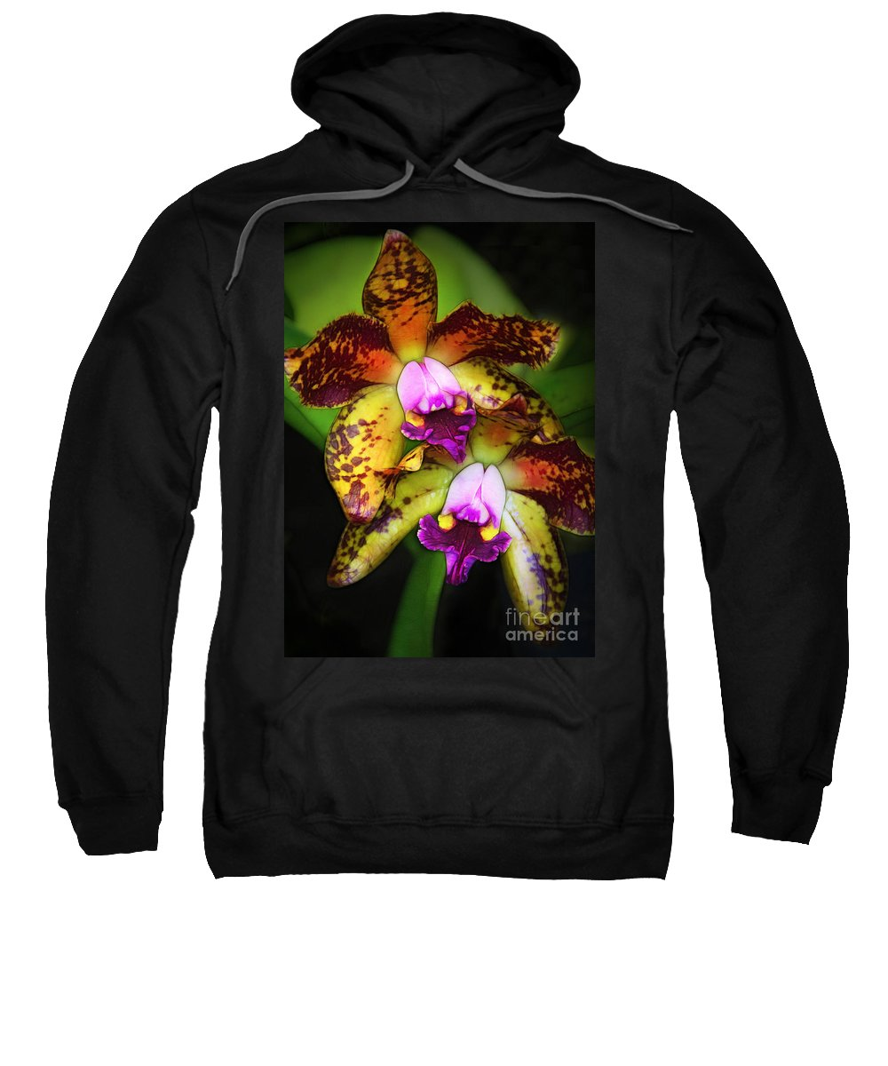 Orchids Sweatshirt featuring the photograph Orchid Elegance by Judi Bagwell