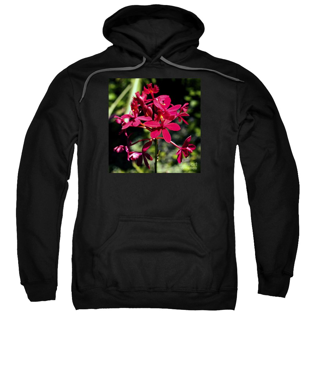 Fine Art Photography Sweatshirt featuring the photograph Orchid Study V by Patricia Griffin Brett