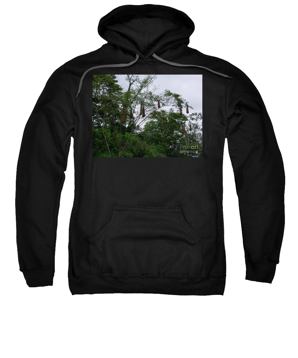 Oriole Sweatshirt featuring the photograph Oriole High Up In The Jungle Canopy by Jennifer E Doll