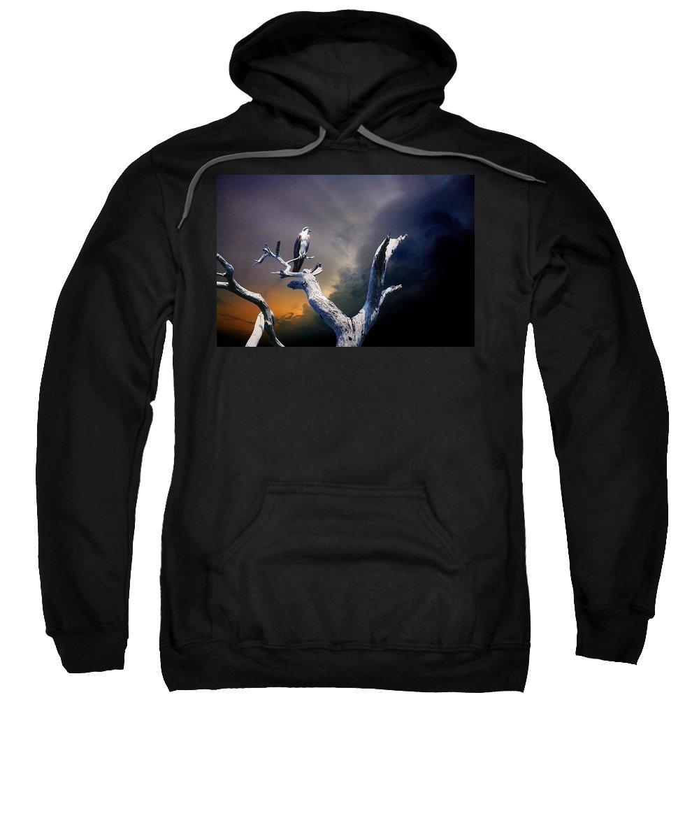Osprey Sweatshirt featuring the photograph Osprey by Mal Bray