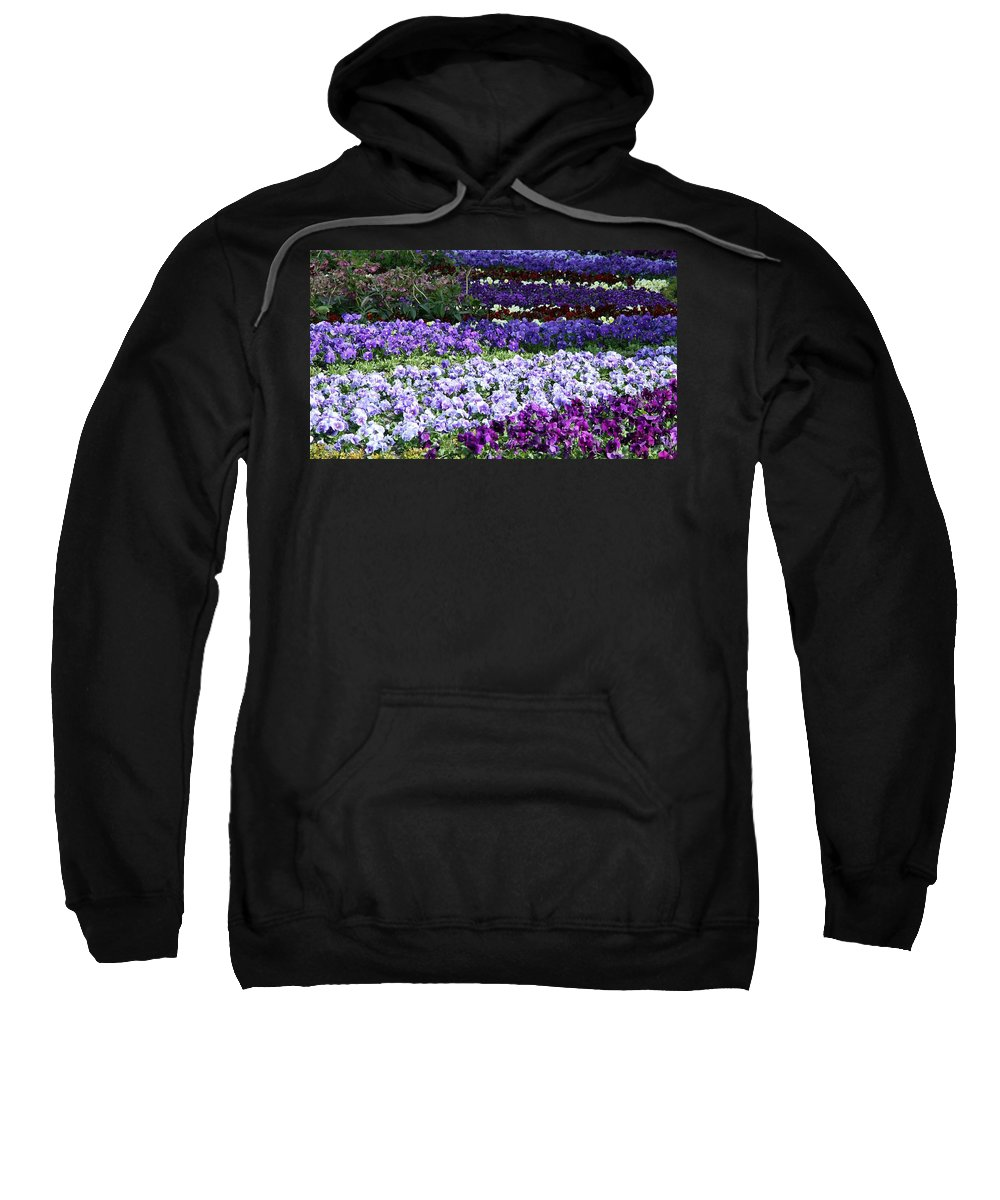 Pansy Sweatshirt featuring the photograph Pansy Field by Christiane Schulze Art And Photography