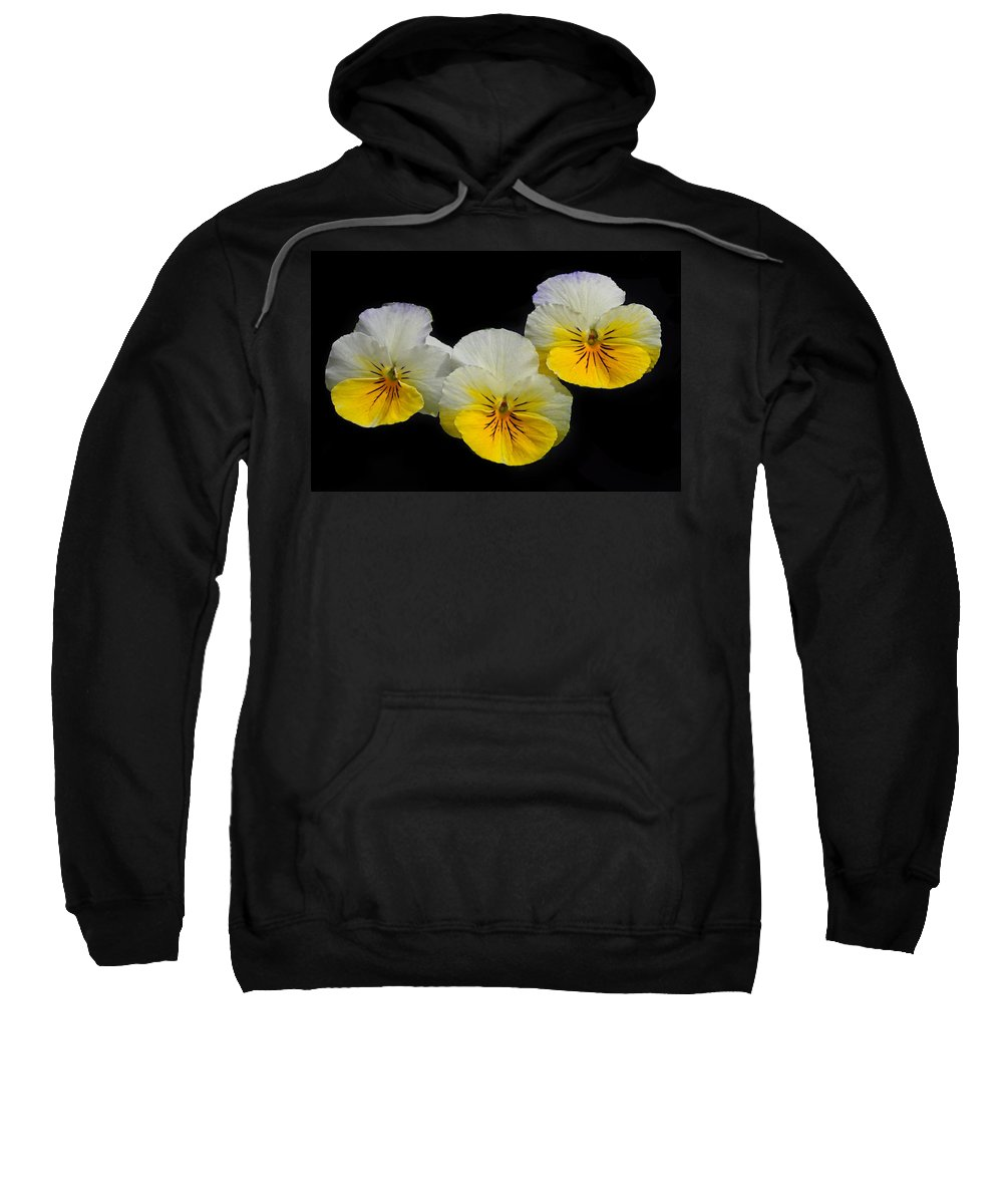 Pansy Sweatshirt featuring the photograph Pansy Trio by Dave Mills