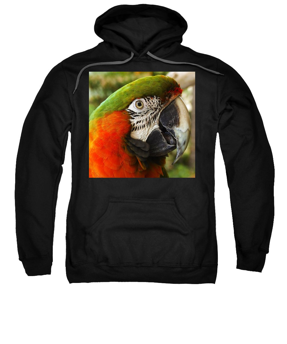 Beak Sweatshirt featuring the photograph Parrot 26 by Ingrid Smith-Johnsen
