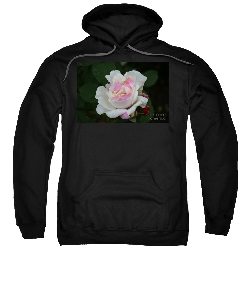 Rose Sweatshirt featuring the photograph Pastel Summer Dream by Christiane Schulze Art And Photography