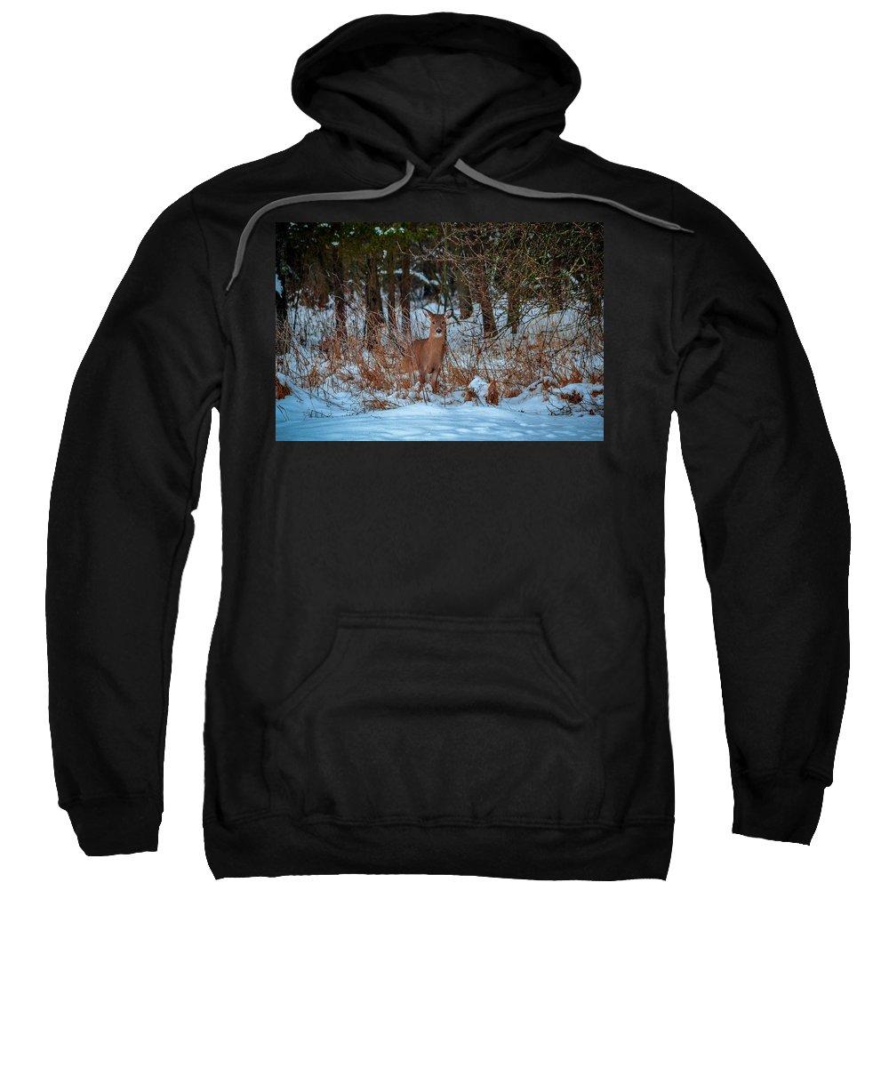Peace Valley Park Deer Sweatshirt featuring the photograph Peace Valley Park Deer by Michael Brooks