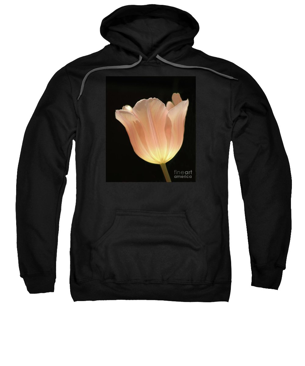 Peach #tulip #flower #floral #botanical #spring Sweatshirt featuring the photograph Peach Glow by Kathleen Struckle