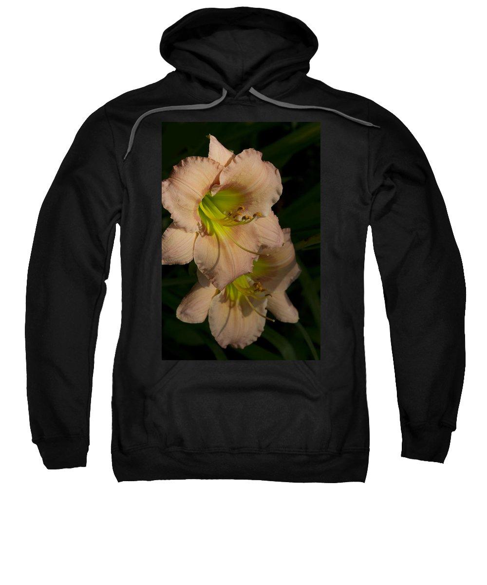 Hemerocallis Sweatshirt featuring the photograph Peach Parfait Daylilies by Kathy Clark