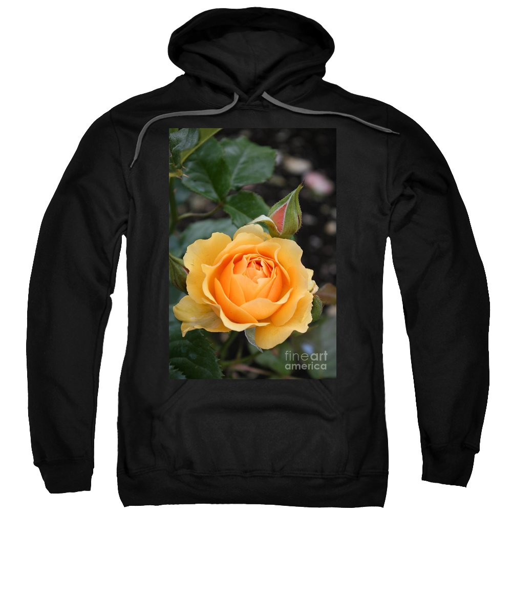 Rose Sweatshirt featuring the photograph Perfect Rose by Christiane Schulze Art And Photography