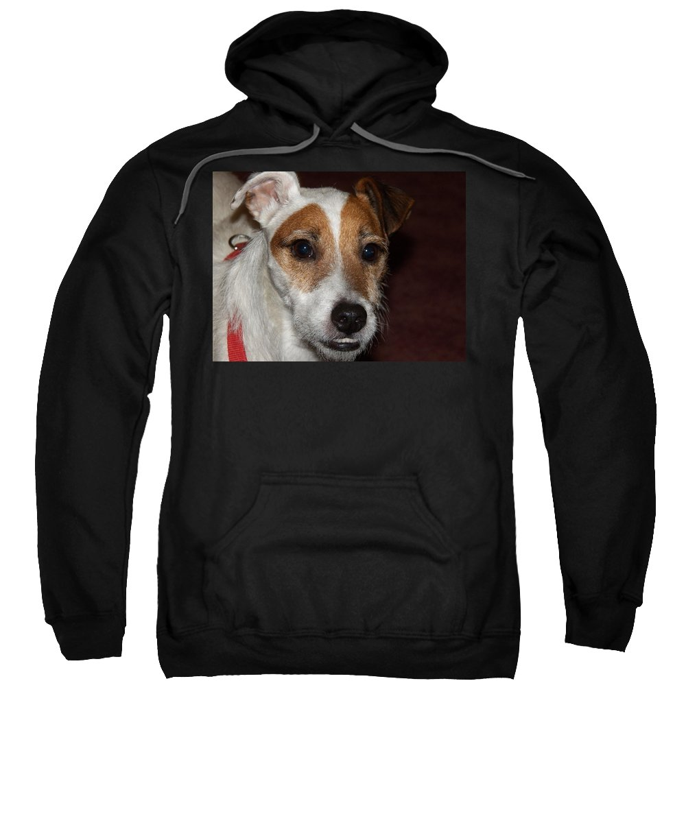 Digital Photography Sweatshirt featuring the photograph Petey Dog Jack Russell by Laurie Kidd