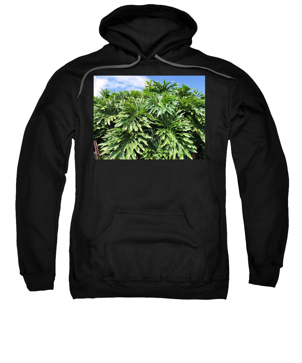 Plant Sweatshirt featuring the photograph Philodendron 1 by Dawn Eshelman