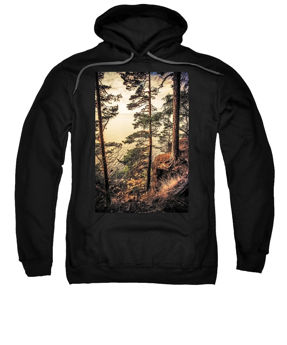 Nature Sweatshirt featuring the photograph Pine Trees Of Holy Island by Jenny Rainbow