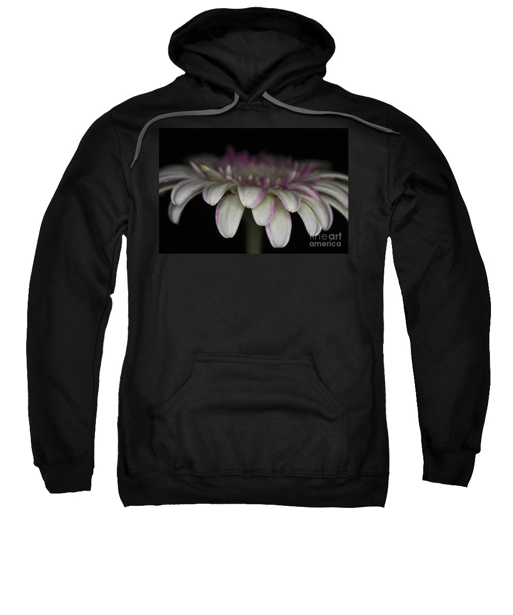 Pink Gerbera Flower Sweatshirt featuring the photograph Pink And White Gerbera 3 by Steve Purnell