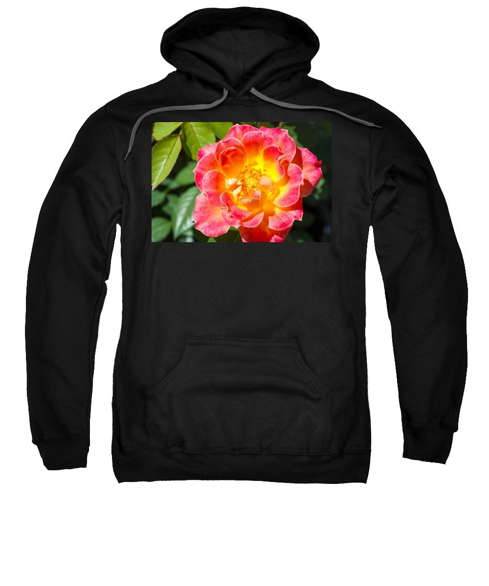 Pink Rose And Yellow Rose Sweatshirt featuring the photograph Pink And Yellow Rose by Cynthia Woods