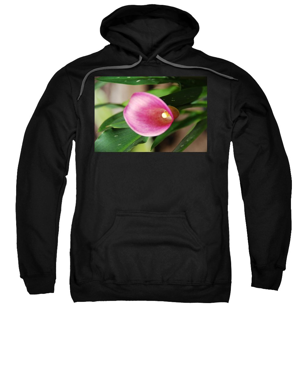 Pink Sweatshirt featuring the photograph Pink Cala Lily by Todd and Ashleigh Madsen