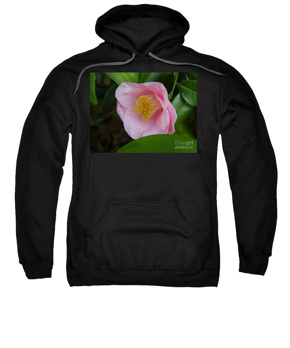 Camellia Sweatshirt featuring the photograph Pink Camellia About To Bloom by Jussta Jussta