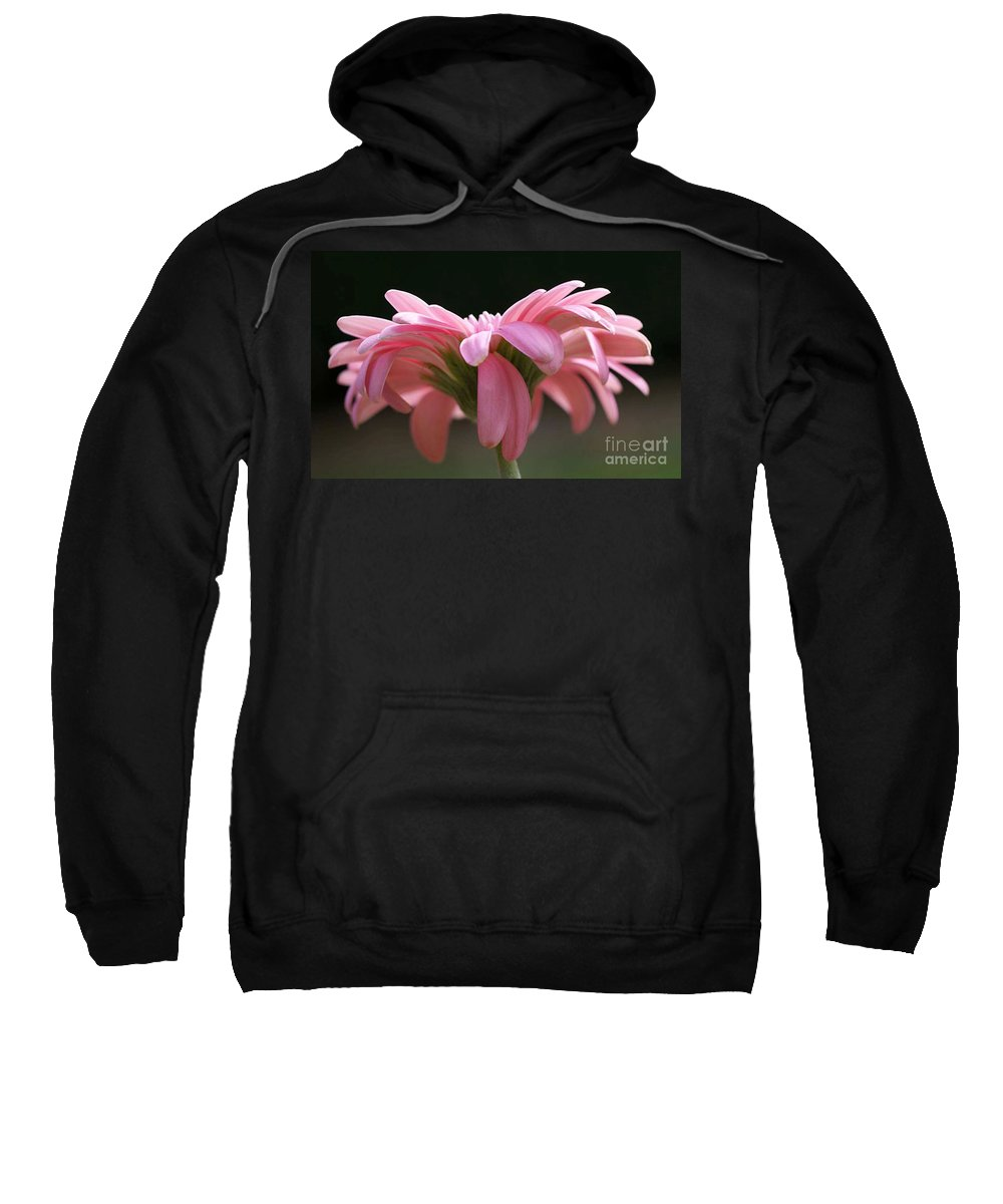 Pink Sweatshirt featuring the photograph Pink Daisy 1 by Carol Lynch