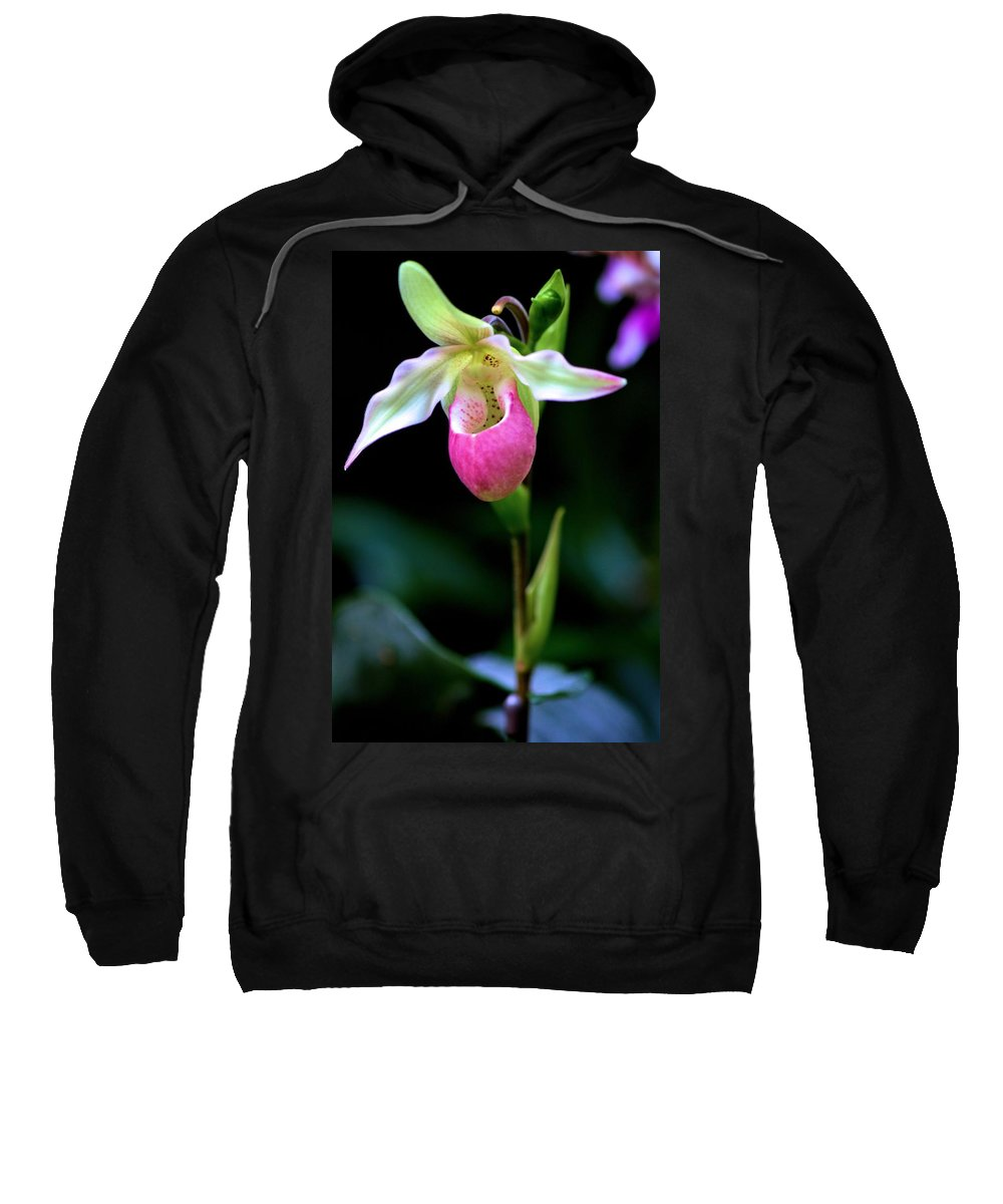 Carol R Montoya Sweatshirt featuring the photograph Pink Lady's Slipper by Carol Montoya