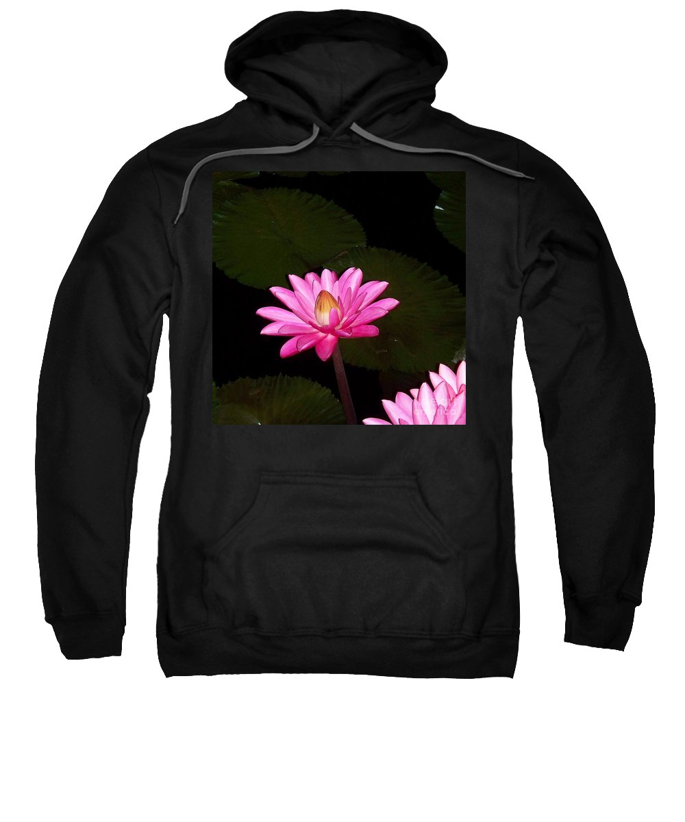 Pink Lilies Sweatshirt featuring the photograph Pink Lilies And Pads by Eric Schiabor
