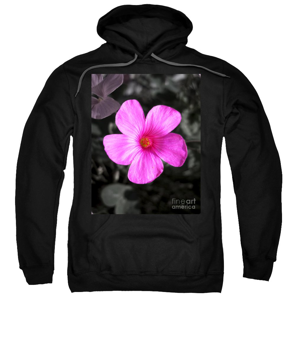 Flower Sweatshirt featuring the photograph Pink Phlox by Nina Ficur Feenan