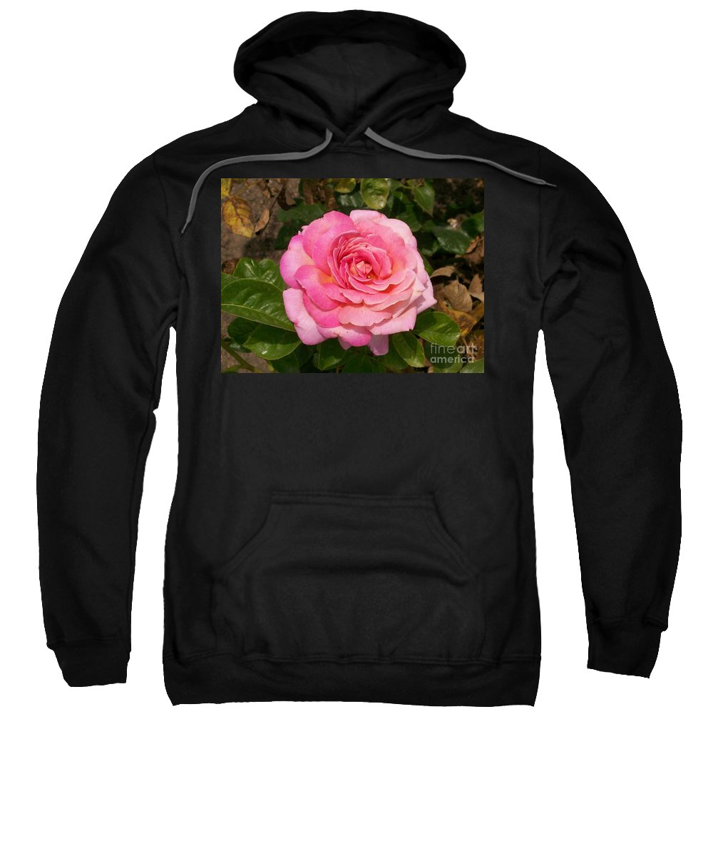 Pink Sweatshirt featuring the photograph Pink Rose Full Bloom by Laurie Eve Loftin