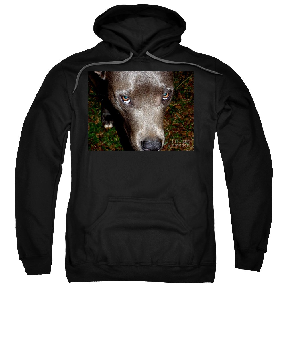 Brown Sweatshirt featuring the photograph Pit Bull - 1 by Mary Deal