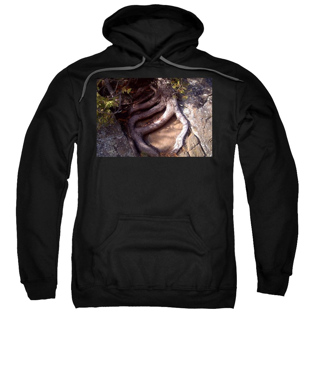Roots Sweatshirt featuring the photograph Planted On The Rock by Tim Beebe