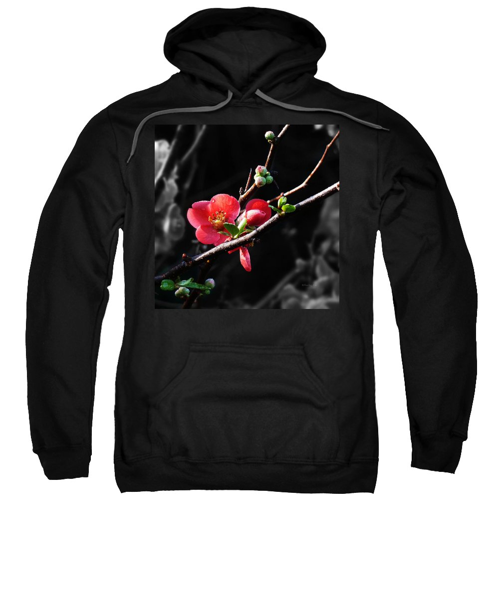 Morning Sweatshirt featuring the photograph Plum Blossom 3 by Xueling Zou