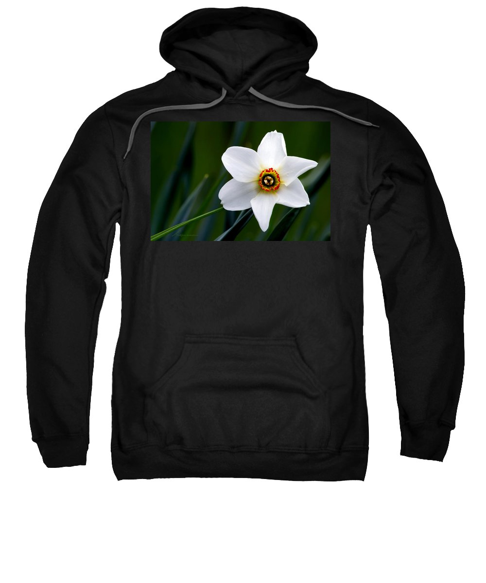 Poet's Daffodil Sweatshirt featuring the photograph Poet's Daffodil by Torbjorn Swenelius
