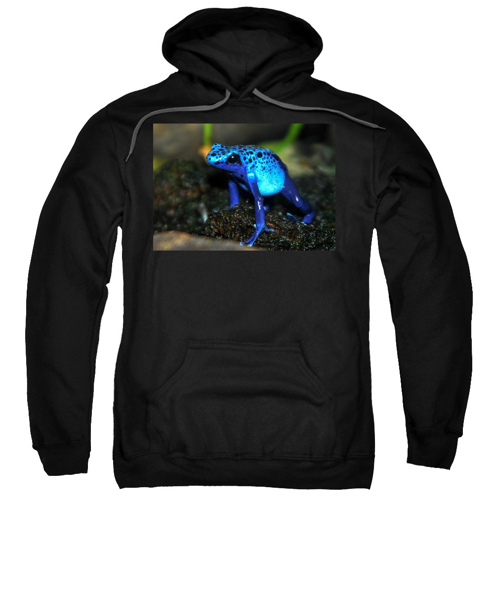 Blue Frog Sweatshirt featuring the photograph Poison Blue Dart Frog by Optical Playground By MP Ray