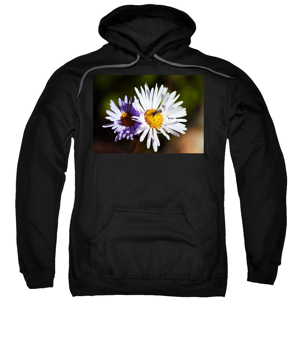 Wildflower Sweatshirt featuring the photograph Pollination by Brian Kerls
