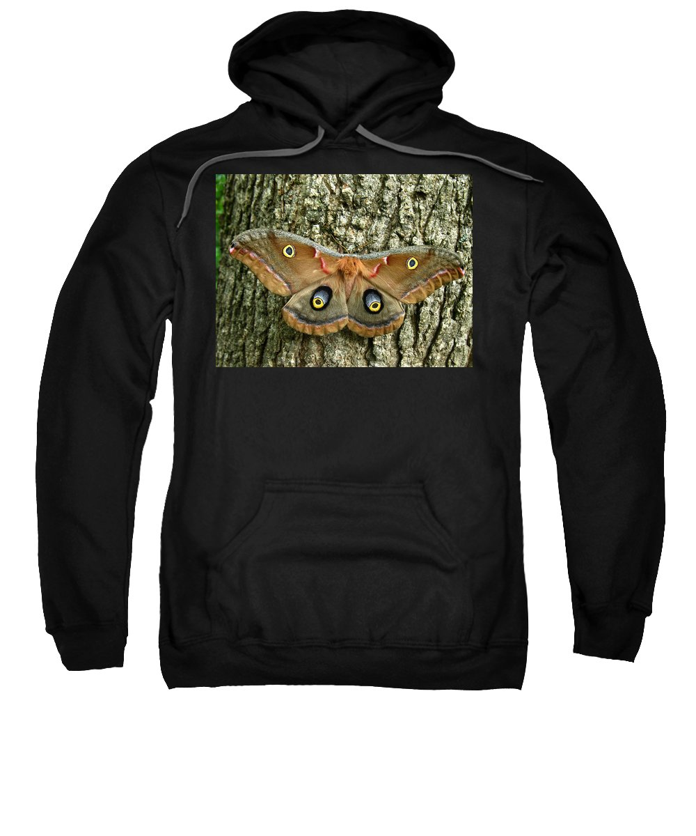 Antheraea Polyphemus Sweatshirt featuring the photograph Polyphemus Moth by William Tanneberger