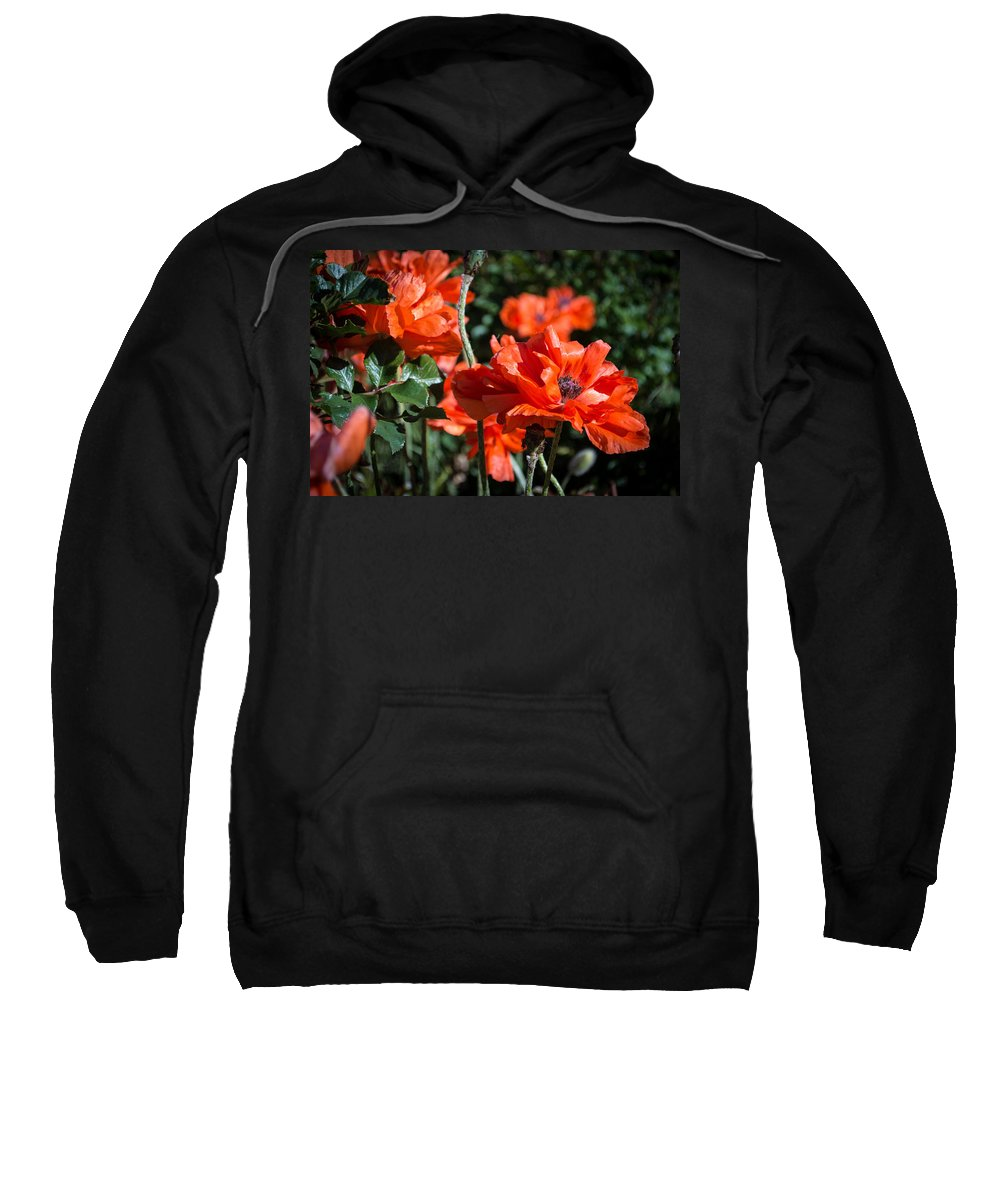 Poppies Sweatshirt featuring the photograph Poppies by Debra Powell
