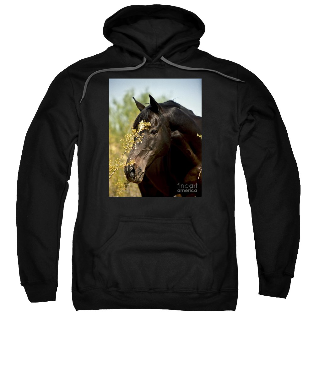 Horse Sweatshirt featuring the photograph Portrait of a Thoroughbred by Kathy McClure