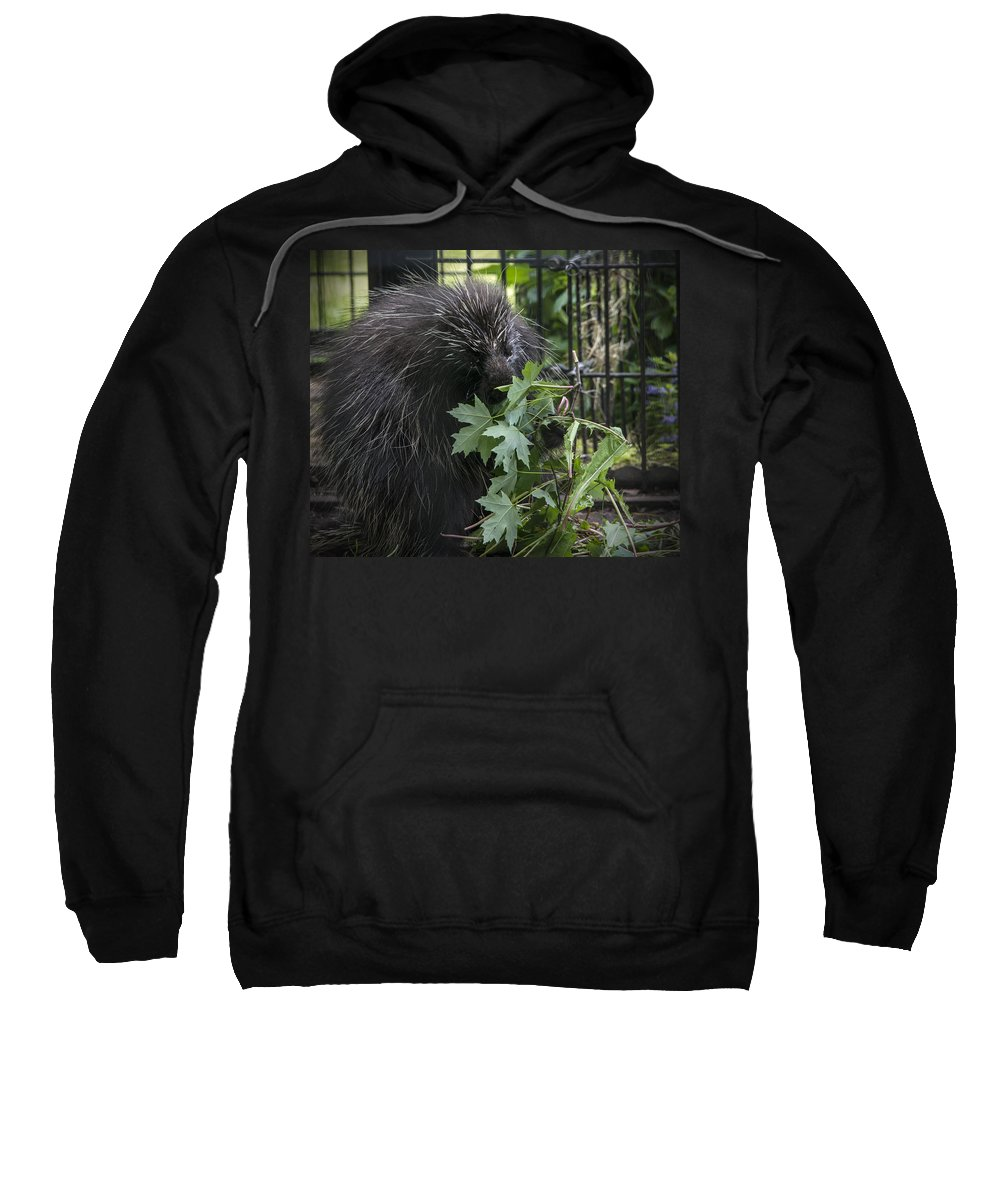 Porcupine Sweatshirt featuring the photograph Prickly Pete by Jayne Gohr