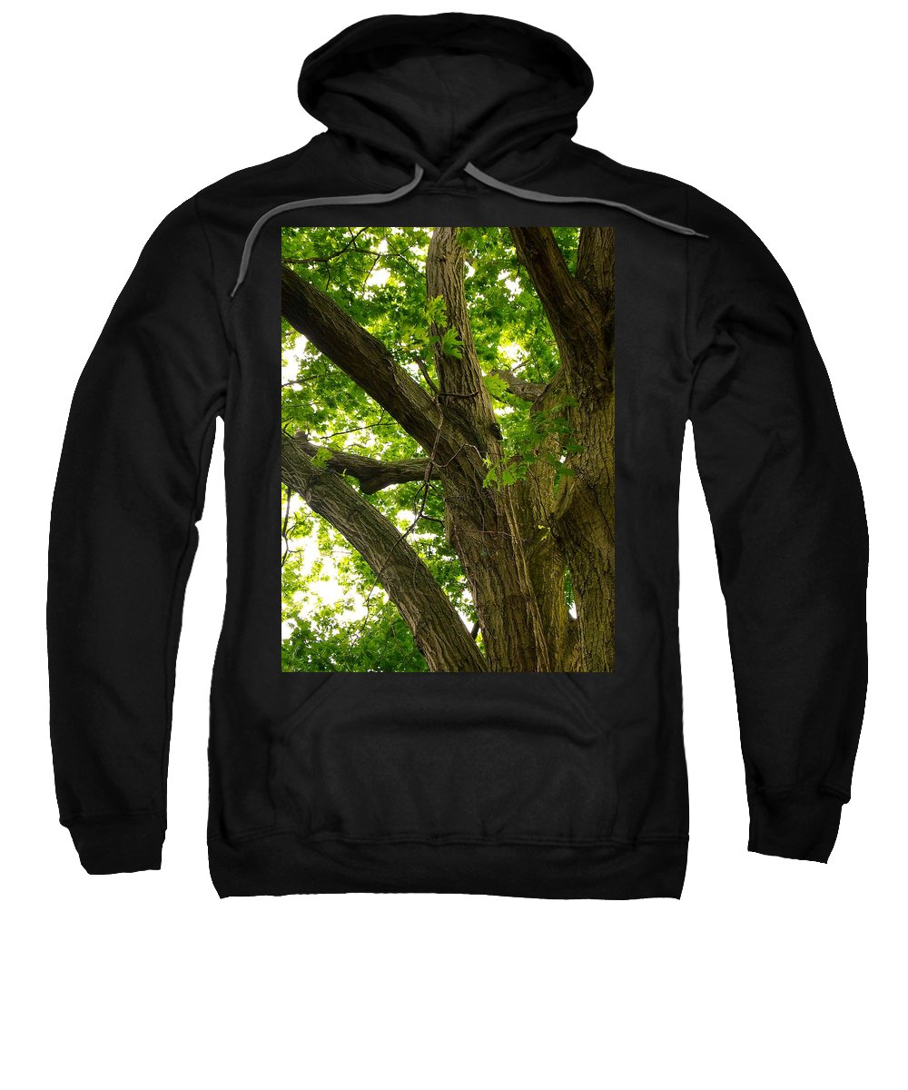 Lanscape Sweatshirt featuring the photograph Protection by Jill Rucker Simmons