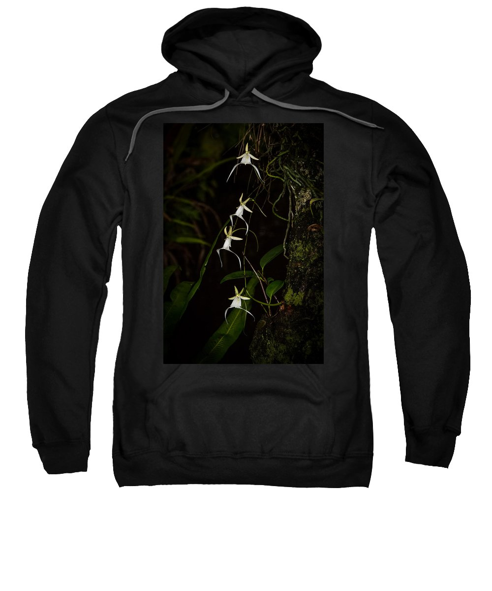 Sweatshirt featuring the photograph Quad Ghost Orchid by Dennis Goodman